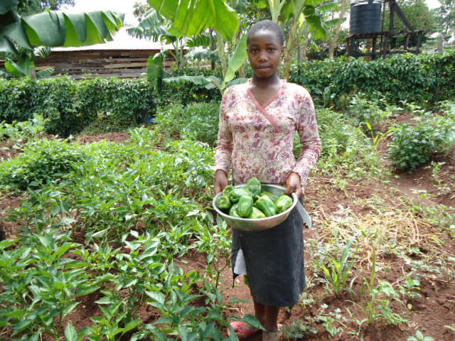 farming_kisia-with-harvesting-green-pepper